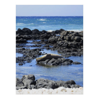Hawaiian Monk Seal Sunbathing Poster
