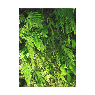 Hawaiian Moss and Ferns Canvas Print