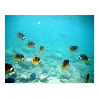 Hawaiian Ocean Scene Postcard