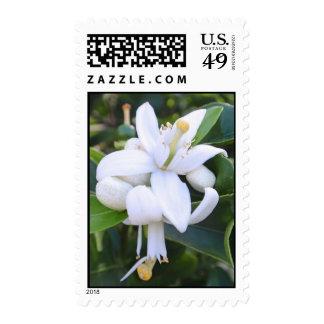 Hawaiian Orange Blossoms Stamp