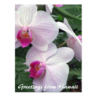 hawaiian orchids postcards