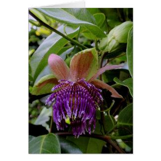 Hawaiian Passion Fruit Blossom Card