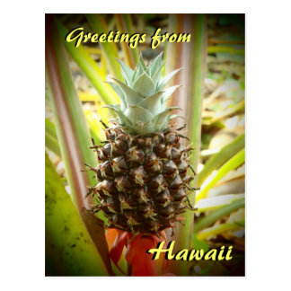 Hawaiian pineapple greetings postcard