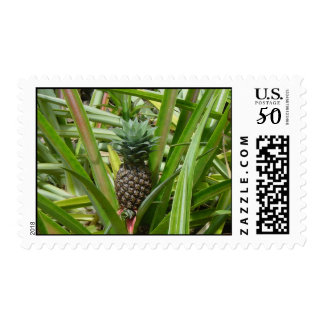 Hawaiian Pineapple Plantation Postage