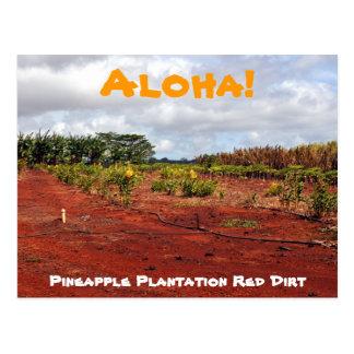 Hawaiian Pineapple Plantation Postcard