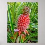 Hawaiian Pineapple Poster