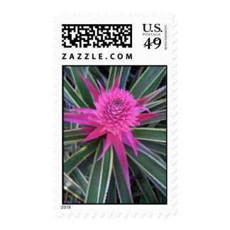 Hawaiian Pink Pineapple Postage