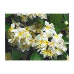 Hawaiian Plumeria Canvas Prints