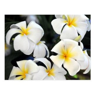 Hawaiian Plumeria Cascade Postcard
