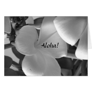 Hawaiian Plumeria Flowers in Black and White Card