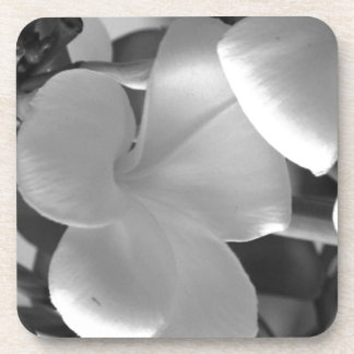 Hawaiian Plumeria Flowers in Black and White Coaster