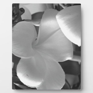 Hawaiian Plumeria Flowers in Black and White Plaque