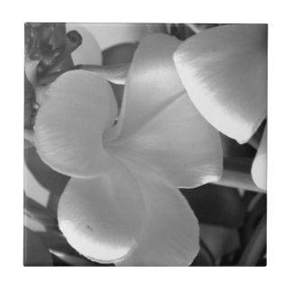 Hawaiian Plumeria Flowers in Black and White Tile