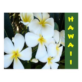 Hawaiian Plumeria Postcard