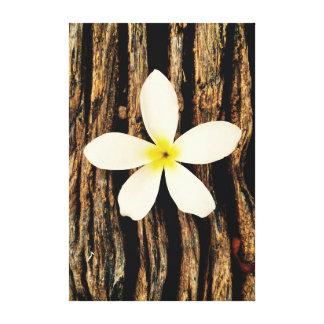 Hawaiian Plumeria Statement Piece Canvas Print