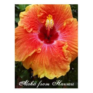 Hawaiian postcard, hawaii, aloha, hibiscus,flower, postcard