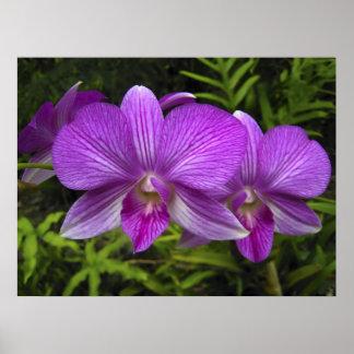 HAWAIIAN PURPLE  ORCHID POSTER