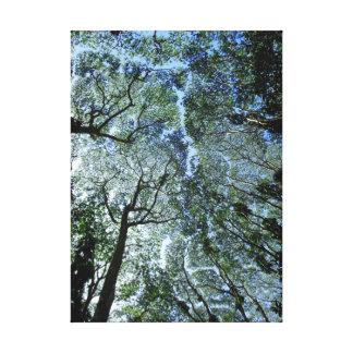 Hawaiian Rain Forest Canopy Canvas Print