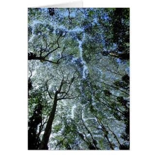 Hawaiian Rain Forest Canopy Card