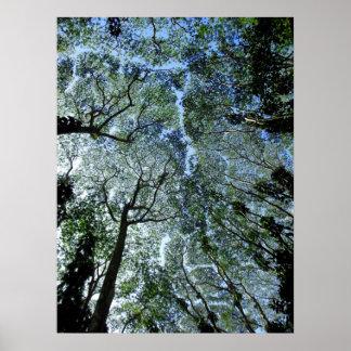 Hawaiian Rain Forest Canopy Poster