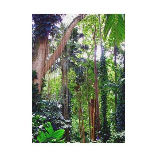 Hawaiian Rain Forest Canvas Prints