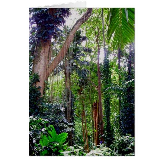 Hawaiian Rain Forest Card