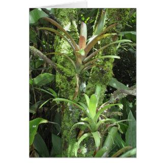 Hawaiian Rainforest Greeting Card