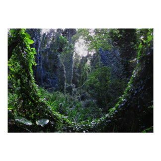 Hawaiian Rainforest Poster