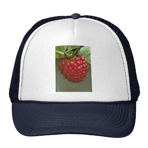 Hawaiian raspberry (Rubus hawaiiensis) Trucker Hat