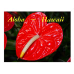 Hawaiian Red Anthurium Flowers Post Card