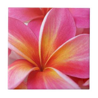 Hawaiian rosado de la flor de Hawaii del Frangipan Azulejo Cuadrado Pequeño