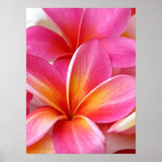 Hawaiian rosado de la flor de Hawaii del Frangipan Póster