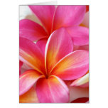 Hawaiian rosado de la flor de Hawaii del Frangipan Felicitación