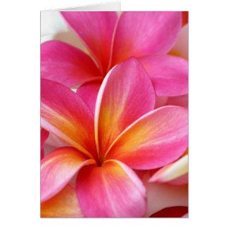 Hawaiian rosado de la flor de Hawaii del Frangipan Tarjeta Pequeña