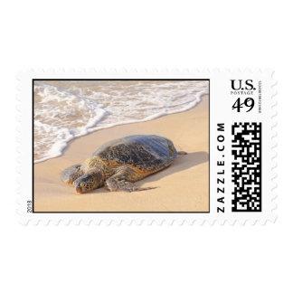 Hawaiian Sea Turtle Postage Stamp