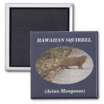 Hawaiian Squirrel (Asian Mongoose) Square Magnet