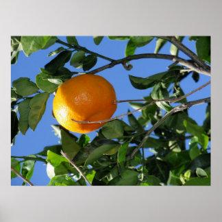 Hawaiian Tangerine Poster