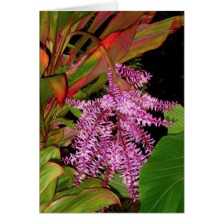 Hawaiian Ti Blossom Card