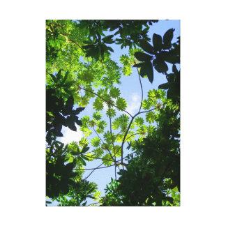 Hawaiian Tropical Canopy Canvas Print