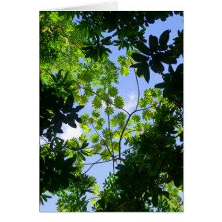 Hawaiian Tropical Canopy Card