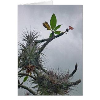 Hawaiian Tropical Card