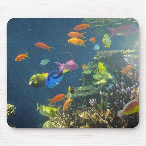 Hawaiian tropical fish mouse pad zazzle for Tropic fish hawaii