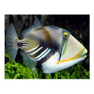 Hawaiian Tropical Fish Postcard