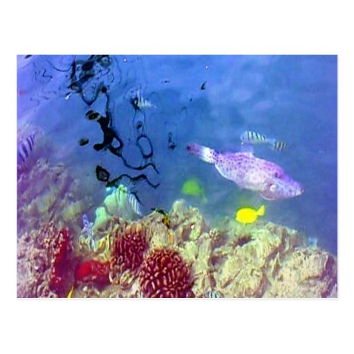 Hawaiian tropical fish postcard zazzle for Tropic fish hawaii