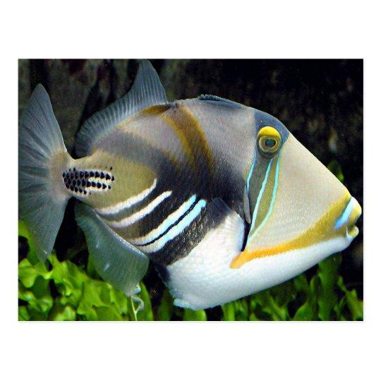 Hawaiian tropical fish postcard for Tropic fish hawaii
