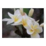 Hawaiian Tropical Plumeria Cards