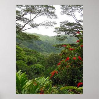 Hawaiian Tropical Rain Forest Poster