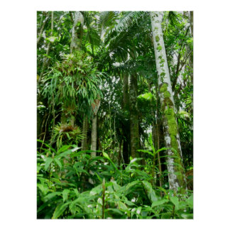 Hawaiian Tropical Rain Forest Poster