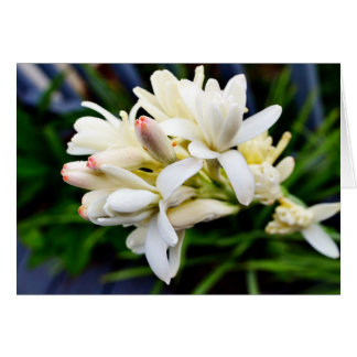 Hawaiian Tuberose Cluster Greeting Card