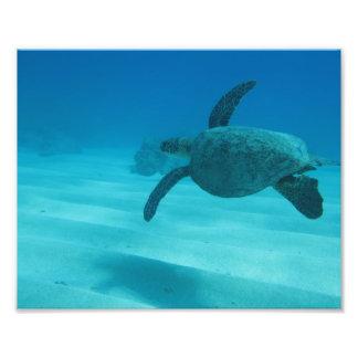 Hawaiian Turtle Photo Print